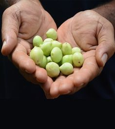 Kakadu plum is also known as Gubinge, Billygoat Plum, Gurumal or Murunga. Kakadu plum is the richest source of Vitamin C. This contains Vitamin C even more t Plum Health Benefits, Healthy Mind, Healthy Habits, Mustard Oil For Hair, Antioxidant Vitamins, Eating Raw, Vitamin C, Weight Gain, Collagen
