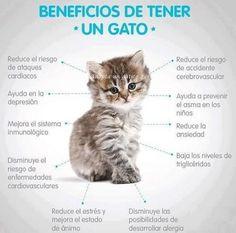 Gatito... Me encantan mis gatos y es muy interesante para leer sobre ellos en español.