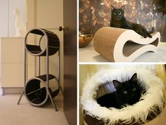 Design Tips to Make a Kitty Feel at Home