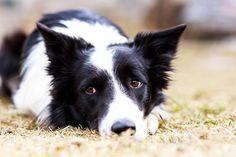 Ein hundiger Tag im Dog Center vom Hotel Grimming in Rauris