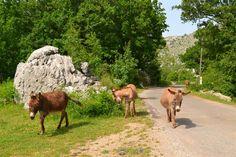 Near Ostros village...