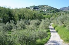 In Tuscany, Lucca, Stately villa hills north, surroundings. Real estate Italy, Tuscany property. www.lucaevillas.it