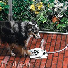 Yaratıcı fikirlerle köpeğinize eğlenceli hediyeler verin