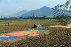 Reisfelder bei der Zugfahrt mit Argo Wilis von #Bandung nach #Yogyakarta