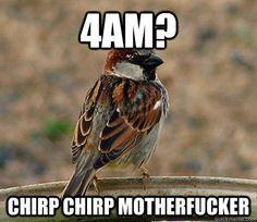 Scumbag bird