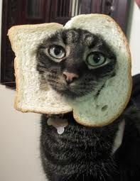 in bread cat ... hahahaha