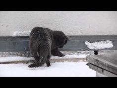 Maya Ze Chat Gris découvre la neige.