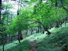 西回りコース 緑の美しい森