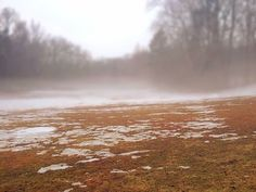 #fog #field #park #nature #snowy #cold #icy #winter