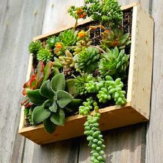 So doing this. I want a succulent garden this year
