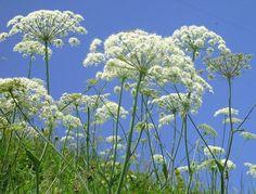 Plantas invasoras. Defiende tus áreas verdes de los invasores de jardines.