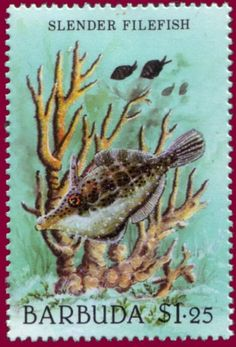 Stamp%3A%20Slender%20Filefish%20(Monacanthus%20tuckeri)%20(Barbuda)%20(Marine%20life)%20Mi%3ABX%20982%2CSn%3ABX%20886%20%23colnect%20%23collection%20%23stamps
