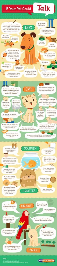 Infographic - If your pet could talk. #pets