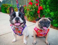 Hey, I found this really awesome Etsy listing at https://www.etsy.com/uk/listing/542387234/flower-dog-harness-custom-dog-harness