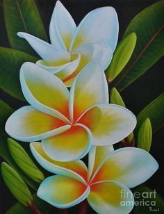 Plumeria Metal Print by Paula Ludovino. All metal prints are professionally printed, packaged, and shipped within 3 - 4 business days and delivered ready-to-hang on your wall. Choose from multiple sizes and mounting options. Tropical Flowers, Art Tropical, Plumeria Flowers, Hawaiian Flowers, Exotic Flowers, Beautiful Flowers, Tropical Artwork, Hawaiian Art, Art Floral