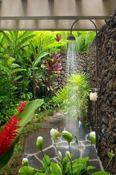 How to grow a tropical garden.beautiful outdoor shower