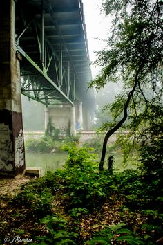 There's lots of life and color under the Nickel Bridge in Richmond, VA!