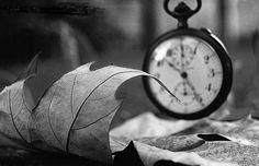 """NAO TENHAS PRESSA, MAS NÃO PERCAS TEMPO Li ontem esta frase de José Saramago: """"Não tenhamos pressa, mas não percamos tempo"""". Prefiro colocá-la na 2ª pessoa"""