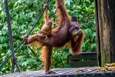 Fotoparade 1. Halbjahr 2017 - Meine Eindrücke aus Borneo