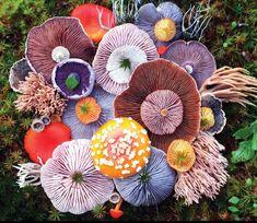 Interesting fungi arrangement.