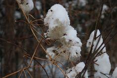 Cold Fusion, Winter Scenery, Outdoor Decor, Plants, Home Decor, Decoration Home, Room Decor, Plant, Home Interior Design