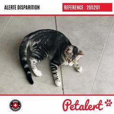 Cette Alerte (205201) est désormais close : elle n'est donc plus visible sur la plate-forme Petalert Suisse. Nous avons retrouvé notre animal Merci pour votre aide. Visible, Aide, Cats, Switzerland, Thanks, Shape, Animaux, Gatos, Cat