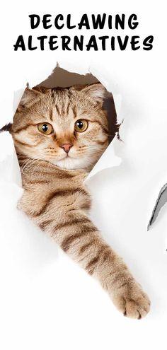 a cirugía alternativas gatos la Declawing 8pE1Fwqx