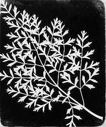 William Henry Fox Talbot (vers 1860)