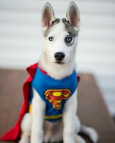 How to Dress Your Dog like a Latte for Halloween & DIY Dog Costumes | Pinterest | Harry potter halloween Diy harry ...