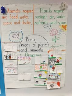 Basic Needs of Plants and Animals | Perfect introductory lesson