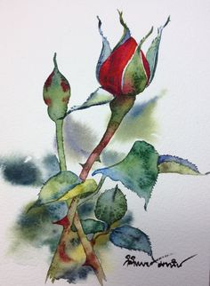 Watercolour rose bud