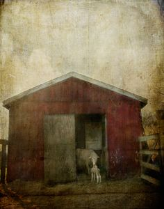 Pet-culiar Photography | Jamie Heiden Photography