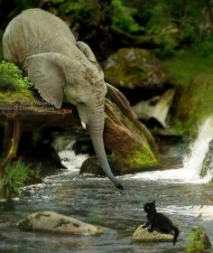 Great photo of an Elephant helping of a cat. Elephants are one of the most emotional animals in the animal kingdom and they are willing to help another animals every time.