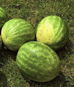 Since this is my first year of watermelon growing, this was a great page with info on the tips and ideas for having fresh, juicy watermelons~ Omnomnom