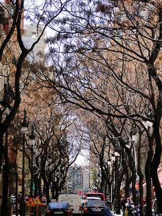 Calle San Vicente desde Plaza de la Reina. Valencia