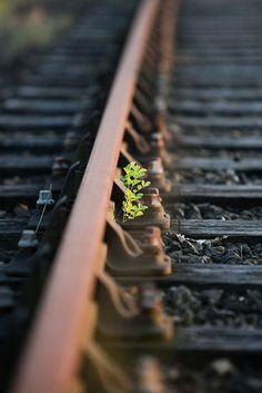 Creative Photography, Landscape Photography, Nature Photography, Depth Of Field Photography, Photo Background Images, Photo Backgrounds, Trains, Level Design, Track Pictures