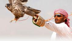 Falconry, Dubai, United Arab Emirates
