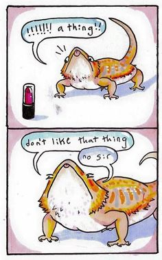 My bearded dragon loves cat toys. - Imgur