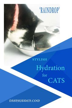 Pet Hydration is cri