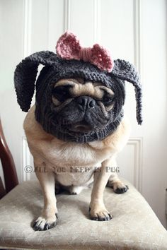 {bunny pug} Ok... this was just too funny not to share..... Poor Sid hopes I dont get any knitting notion...lol