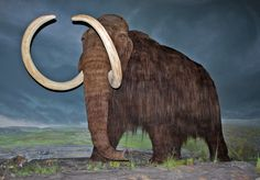 Mammoth history and some interesting facts