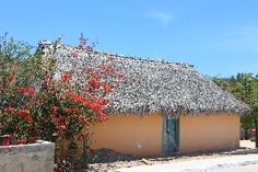 Los Cabos: Desert Exploration. La Candalaria. We stopped at the isolated oasis village of La Candalaria, miles of dirt road from anywhere, but still with its little church and school. Thatched homes such as this one are simple structures and much of the commerce here is by barter.