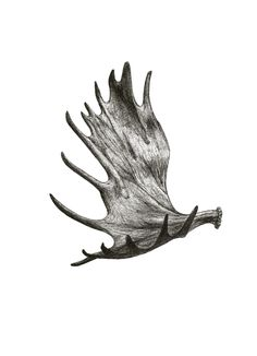 Would make a sweet tattoo, but make it special like get my first elk or deer antler tattoed on