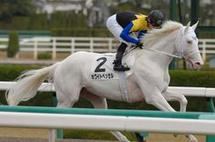 White Vessel Thoroughbred Horse, Dressage, Albino Horse, Horse Coat Colors, Trick Riding, Horse Racing, Race Horses, Sport Of Kings, White Horses