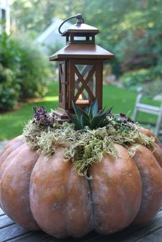 For the Fall entry- a 'Cinderella' pumpkin topped with moss, succulents, and a rustic lantern.