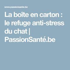 La boîte en carton : le refuge anti-stress du chat | PassionSanté.be