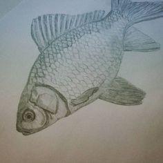 El pez de Alicia  #art #artesalamanca #artwork  #cubogaleriaadultos2015 #pencil #lapiz #fish #pez #draw #dibujo #drawing…