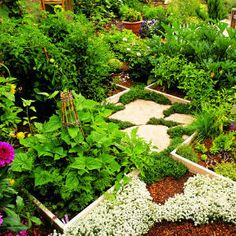 You don't need lots of space to grow herbs and vegetables. At Sunset's headquarters, test-garden coordinator Bud Stuckey planted                                         this organic vegetable garden in four raised beds, each 4 feet square