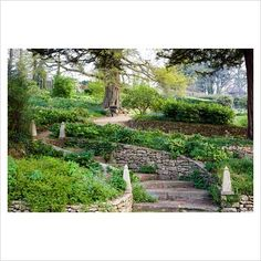 GAP Photos - Garden & Plant Picture Library - Curving stone steps in terraced spring garden - GAP Photos - Specialising in horticultural photography