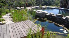 BioNova pool